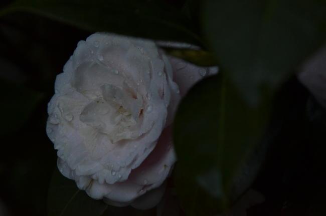 D70_1367.jpg
