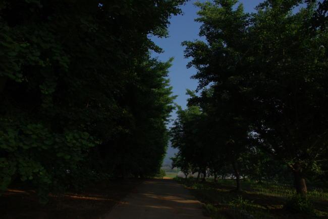 IMGP1865.jpg
