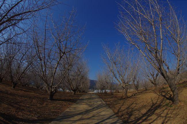IMGP3387.jpg